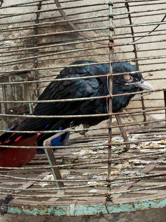 DEPRESSION,Varanasi, Indien, 2013, 120 x 90 cm